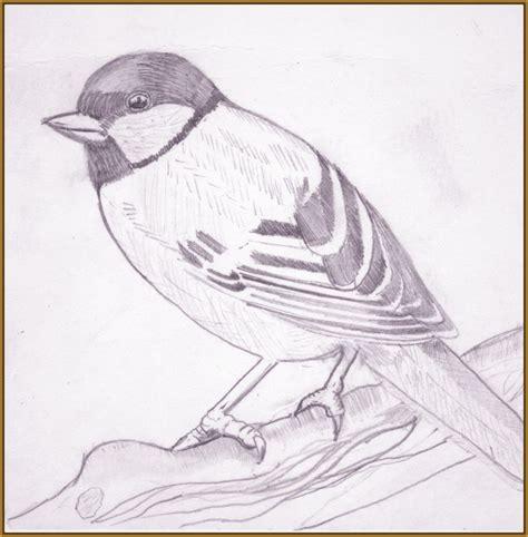 imagenes bonitas para dibujar en blanco y negro fotos de pajaros para dibujar f 225 ciles imagenes de pajaros