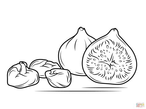 coloring page of a fig tree fig tree coloring coloring pages