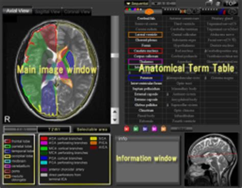 ct and mri interactive atlas of cross sectional anatomy