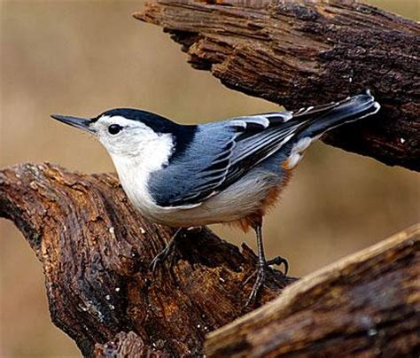 pictures of birds in alabama study climate change threatens birds across alabama alabama radio