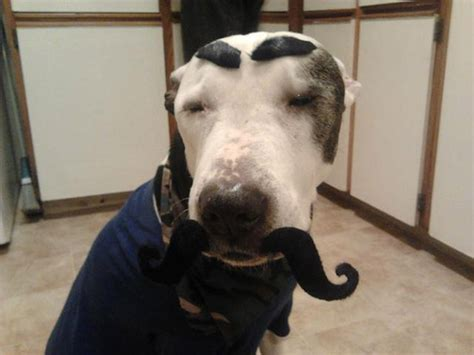 eyebrows on dogs eyebrows on dogs changes everything