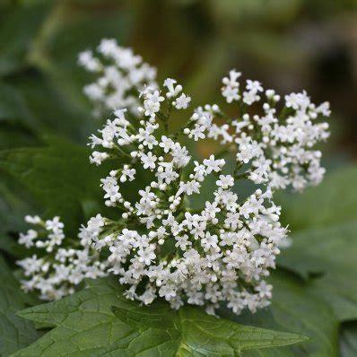 Planter En Juin by Arbustes L 233 Gumes Quoi Planter En Juin Ooreka