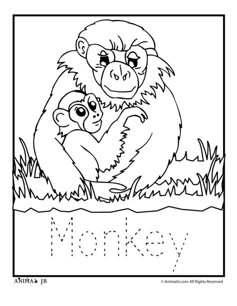 monkey coloring page preschool zoo animal coloring pages baby monkey woo jr kids