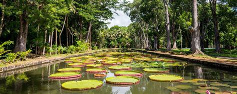 giardino isola il giardino di plemousses isola mauritius
