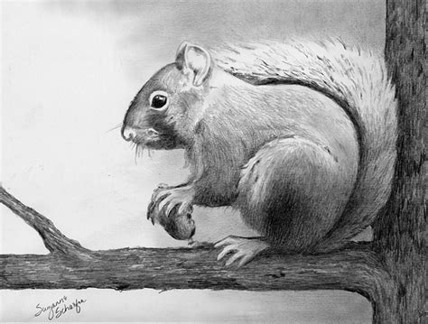 Animal Pencil cool drawings of animals pencil drawing