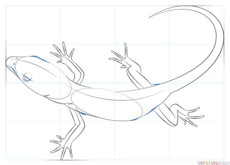 printable version nrl draw 2015 how to draw a realistic lizard step by step drawing