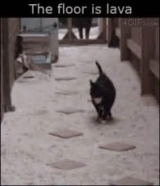 cat the floor is lava
