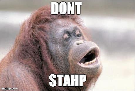 Monkey Meme Generator - monkey ooh meme imgflip
