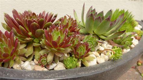 Sukkulenten Pflanzen by Garten Hei 223 E Sommertage Entspannt Genie 223 En Sukkulenten