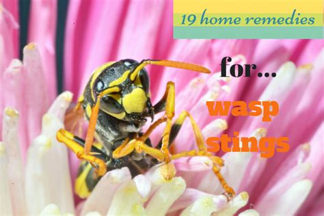 home remedies for wasp stings