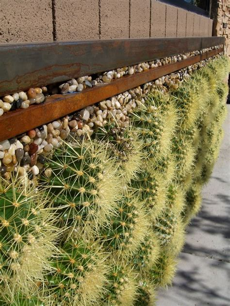 Cactus Wall Planter by A Closer Look At The Barrel Cactus Wall Vertical