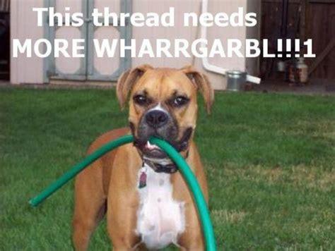 Dog Sprinkler Meme - image 32949 wharrgarbl sprinkler dog know your meme