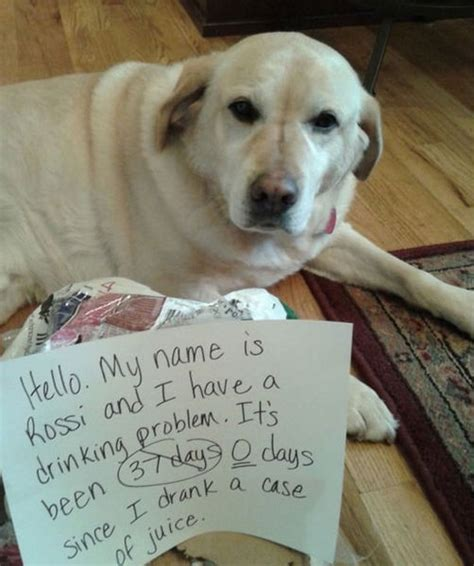 Dog Shaming Meme - dog shaming meme
