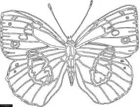 big butterfly coloring page for kids printable