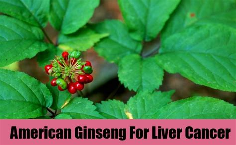 Ginseng Liver Detox by 7 Herbal Remedies For Liver Cancer Best Herbs For Liver