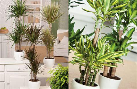 Kleine Kamerplanten Weinig Licht by 6x Grote Kamerplanten Als Blikvanger
