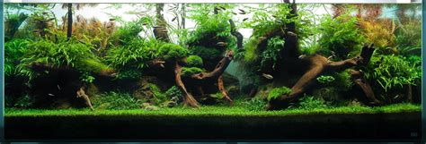 Freshwater Aquascaping Designs by Inspiracja Na Długie Akwarium Akwarium Aqua Design 40