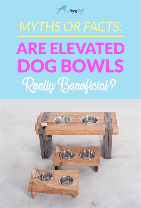 elevated food bowls 5 benefits of elevated food bowls for dogs myths or facts
