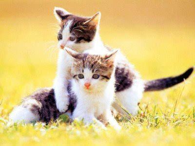 nur khalilah hassan kisah kucing  dunia islam