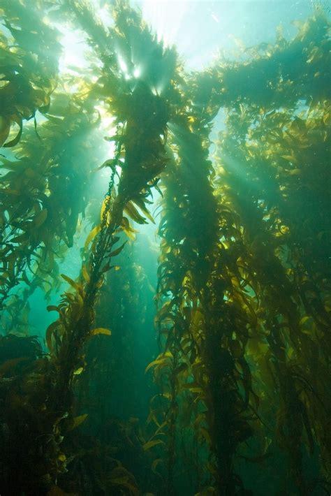 Underwater Garden by 1000 Images About Underwater Gardens On
