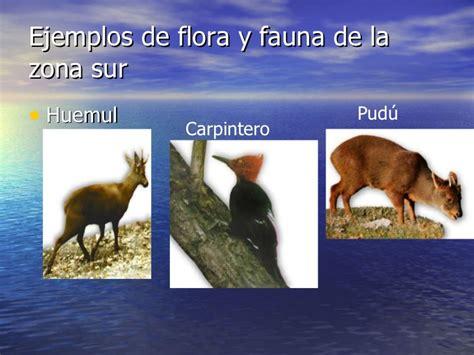 fotos animales zona sur de chile power zonas geo y flora y fauna