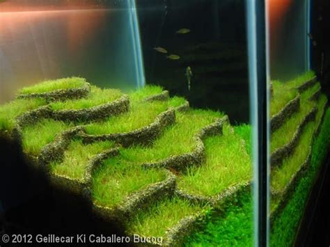 How To Make An Aquascape by 17 Best Images About Aquascape On Fish Tanks
