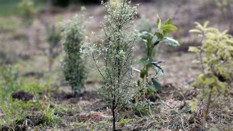 top 28 cheap plants that grow fast fast growing trees