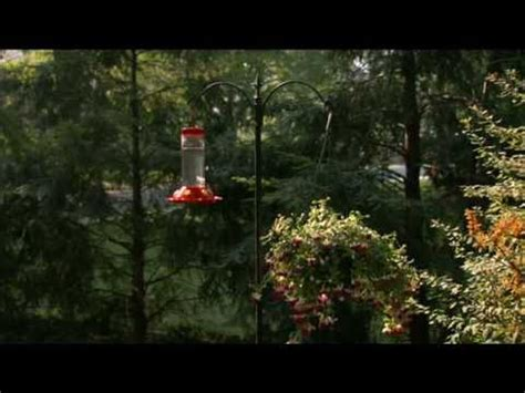 suggested placement for your perky pet 174 hummingbird feeder
