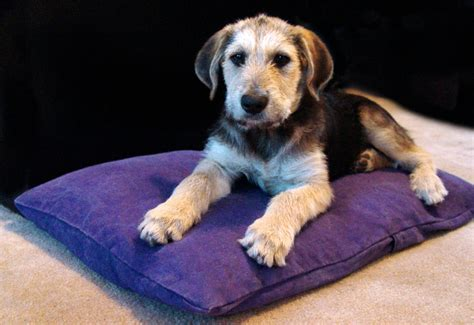 hemp for dogs hemp beds