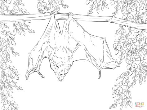 fruit bat coloring page charming bat coloring page image 6 vire bat coloring