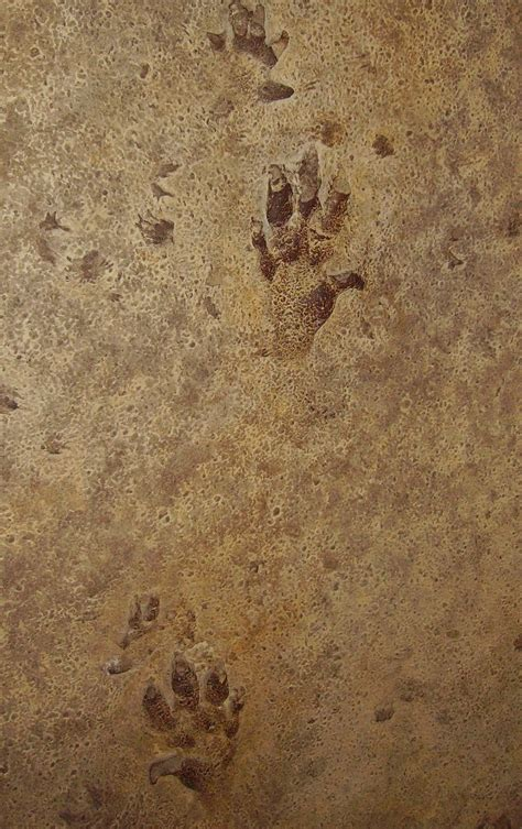 Trace Search Trace Fossil