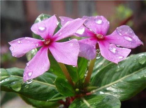 gambaran bunga  hidup gambar foto wallpaper