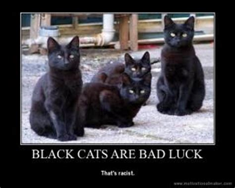 Black Cat Meme - black cat jokes kappit