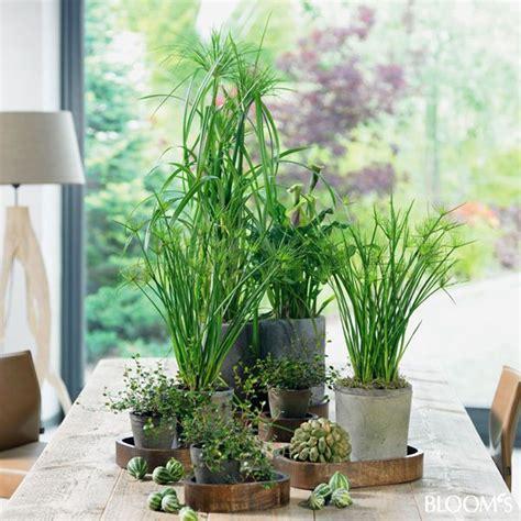 kleine zimmerpflanzen zimmerpflanzen auf kleinen holztabletts deko und