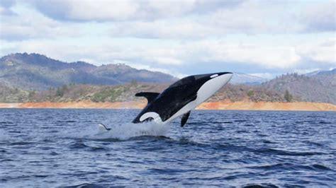 Dolphin On The Sea Iphone Dan Semua Hp 1 seabreacher y kapal selam yang mirip seperti ikan paus