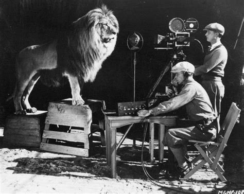 film mgm lion pdn photo of the day mgm lion roaring