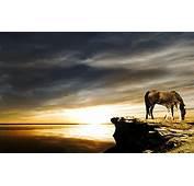 Horse  Download Hd Wallpaper For Desktop And Mobile