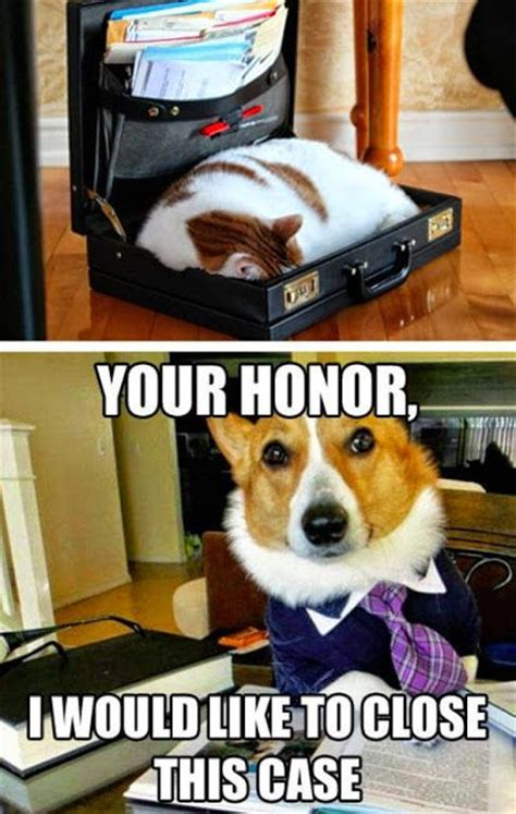 Corgi Lawyer Meme - lawyer corgi is just too perfect corgi officepuppy