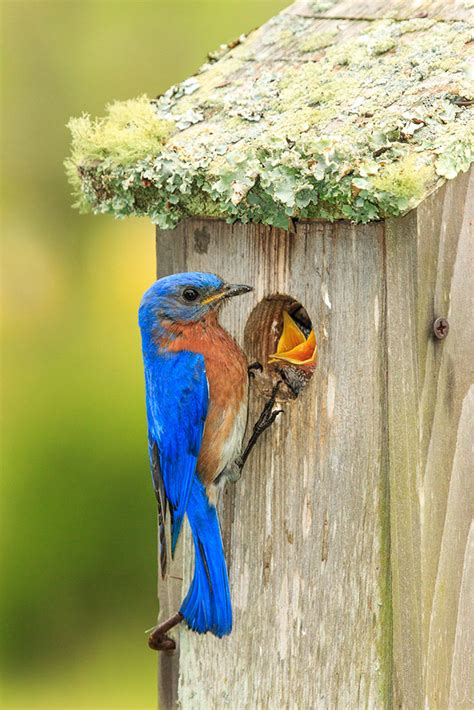 build a nest box to welcome spring birds audubon