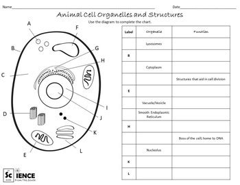 Animal And Plant Cells Worksheet Answers by Plant And Animal Cells Worksheets For Middle And High