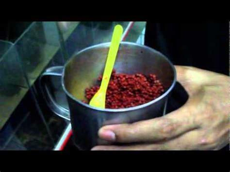 best flower food flowerhorn food fengshui
