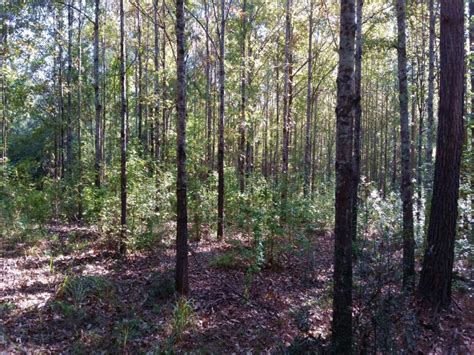 lincoln county schools brookhaven ms 45 acres in west lincoln school land for sale