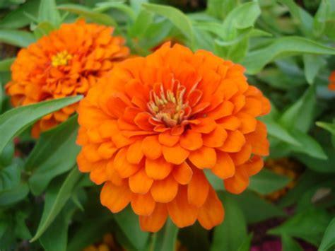 images of plants plant power a webquest for 4th grade process