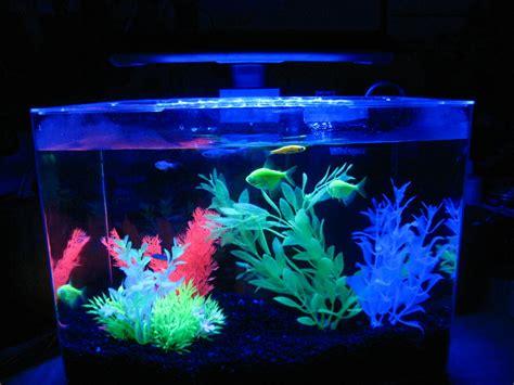 Fish Glow In The what makes them glow my aquarium club