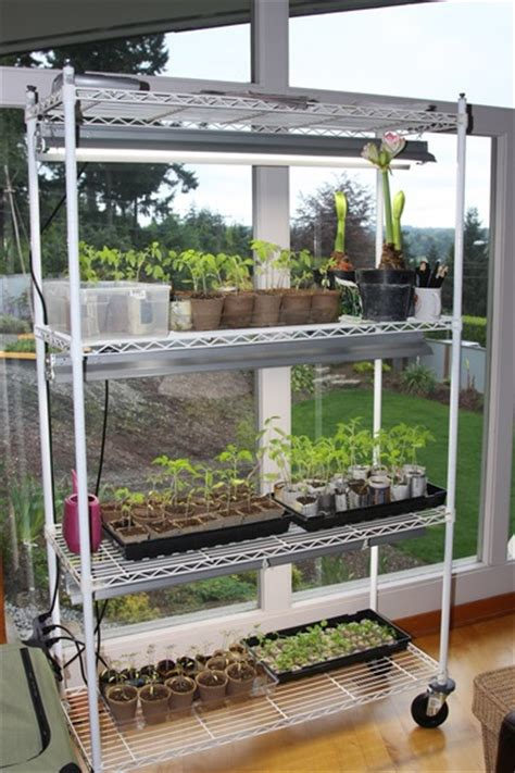 Tomato Rack System by Come On Seedlings