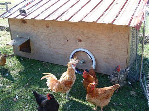 backyard chickens seattle farm bill is now in