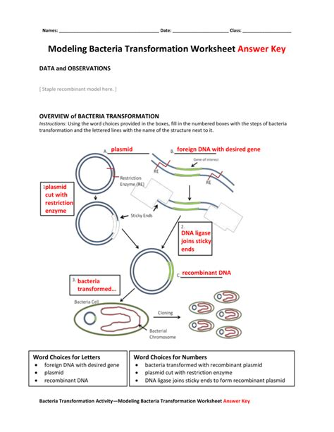 Dna Technology Worksheet by Uncategorized Dna Technology Worksheet Klimttreeoflife
