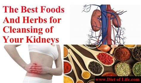 Purpose Of The Kidneys And Detox 17 best images about kidney cleasning on