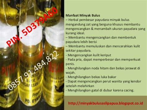 Minyak Bulus Ori Papua minyak bulus papua harga minyak bulus papua tidak bau