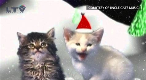 jingle cats cats meowing christmas song silent night youtube